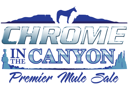 Chrome In The Canyon Premier Mule Sale